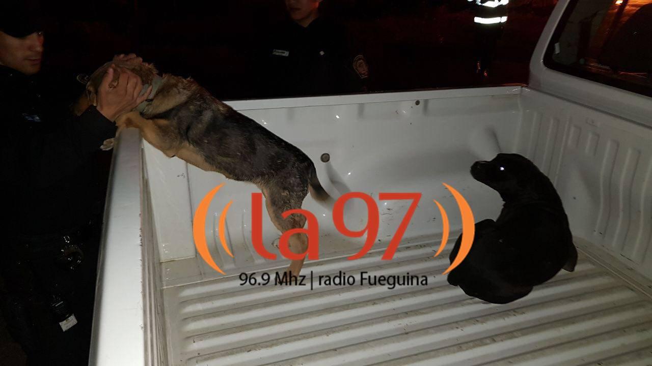 Amor Voraz policía salvó a dos perros de un voraz incendio en la margen