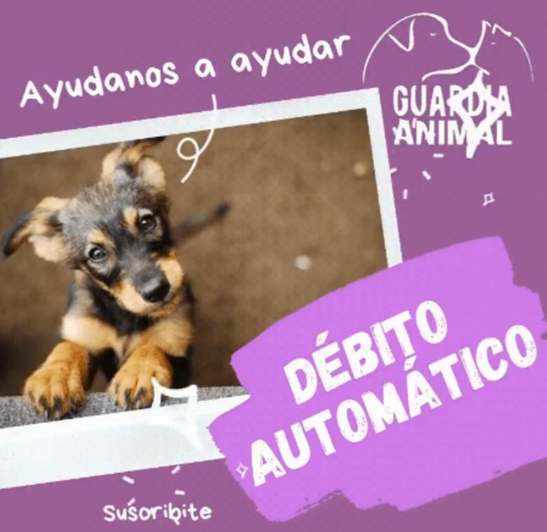 Graciela Cornejo debe mudarse por un problema de salud y pide colaboración para llevar sus perros