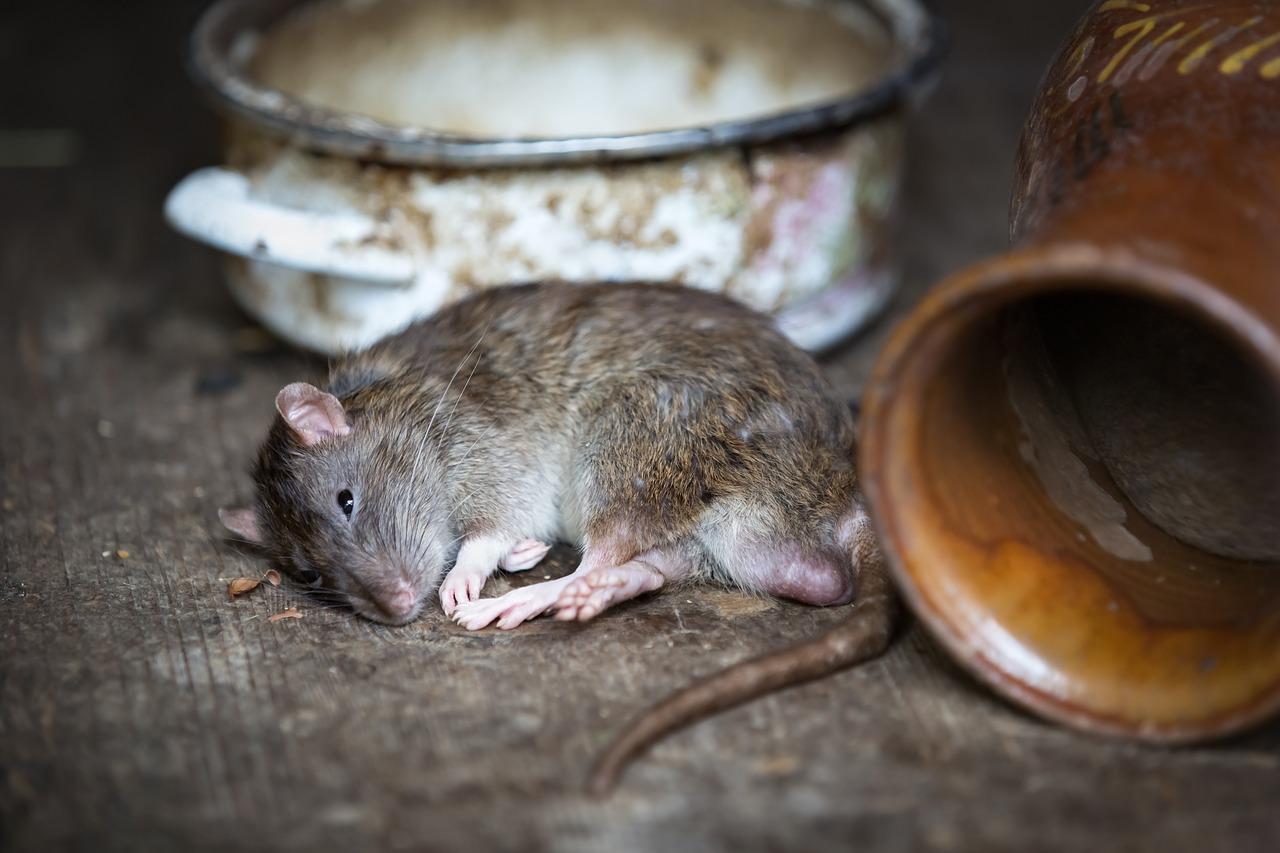 Consejos para prevenir las plagas en viviendas y comercios
